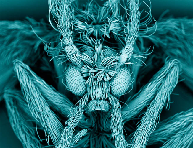 Fotos mais incríveis ciência 2012