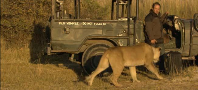 fotografo-devorado-leoa