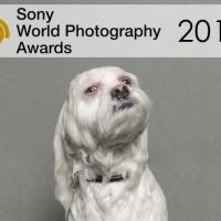 Sony World Photography Awards 2015 | Regulamento, inscrição, prêmios e informações