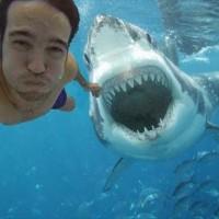 Cuidado com as selfies: elas matam mais que ataques de tubarões