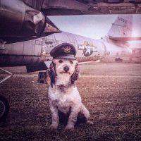 Fotógrafo incentiva a adoção de cães abandonados com suas fotos